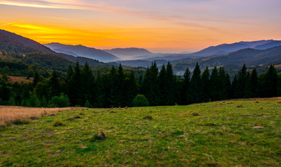 beautiful sunset in Carpathian mountains. view in to the foggy valley of Synevyr National park. row of Spruce trees on the meadow in the foreground