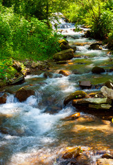 small water stream on sunny day. lovely summer nature scenery