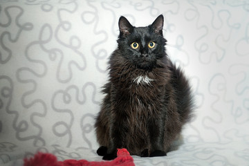 A black cat is sitting on a white plaid.