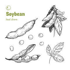 Soybean hand drawn illustration set