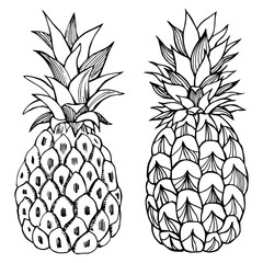 Hand drawn pineapple. Vector sketch illustration