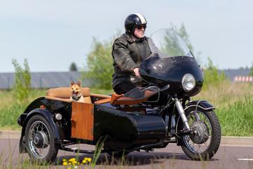 A Shetland Sheepdog is sitting in a motorbike side car