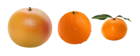 Several kinds of citrus fruits isolated on white background. Manadrin, orange, grapefruit.