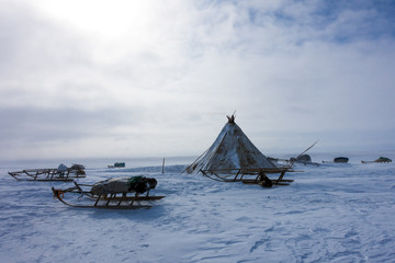 chum - house northern peoples of Russia,Jamal