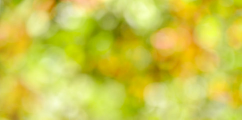 Green blurred background of tree leaves.