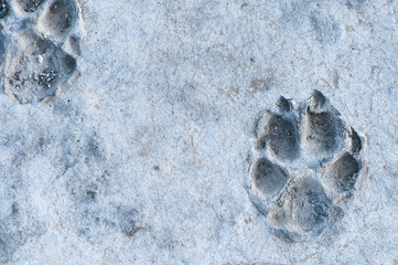 Animal track frozen in stone