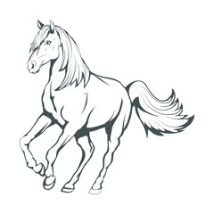 Horse. Hand drawn horse. Sketch of horse head. Vector artwork.