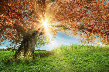 Alone tree sunrise