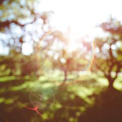 Summer blur bokeh background