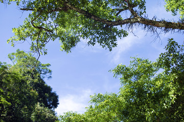 Looking up at tree, green leaves, blue sky and sunshine on beautiful natural background. Space for text. Green background,Abstract branch and leaves.