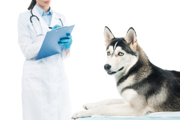 cropped shot of female veterinarian writing in clipboard and husky on table isolated on white background