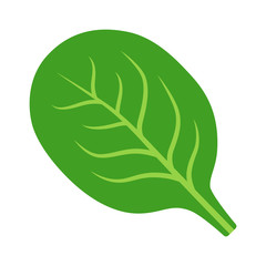 Spinach green vegetable leaf flat vector icon for food apps and websites