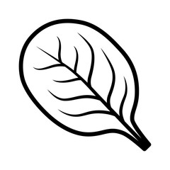 Spinach vegetable leaf line art vector icon for food apps and websites