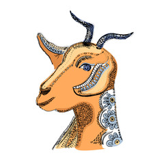 Goat illustration. Vector image of the hand-drawn sketch goat s head. Dairy products, packaging and advertising.