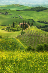 Wall Mural - Tuscany spring landscape, Val d'Orcia, Italy