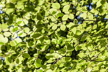 Bright fresh nature green leaves