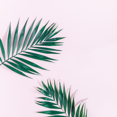 Summer tropical composition. Green tropical leaf on pink background. Summer concept. Flat lay, top view, copy space, square