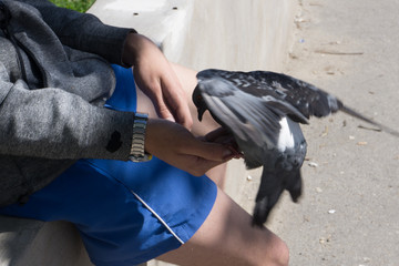 first-person view doves eat seed from person hand