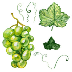 Watercolor grape isolated on white background, hand drawn paint illustration berry and leaf isolated on white background, organic food herbal decorative fruit for cosmetic package, design natural menu