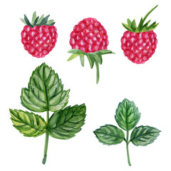 Watercolor raspberry isolated on white background, hand drawn painting illustration berry and leaf, organic vegan food herbal decorative fruit set for cosmetic package, design restaurant menu