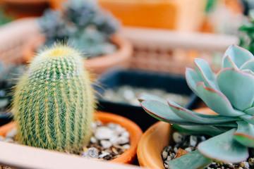 Soft focus and Blur. Minimal creative still life cactus tropical background modern art, instagram style filter photo vintage tone