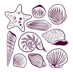 Sea shells vector set. Hand drawn illustrations.