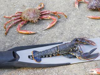 Araignée de mer et homard bleu
