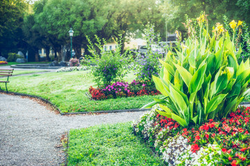 Poster de jardin Olive Summer garden or park landscaping with beautiful canna and flowers bed , outdoor nature