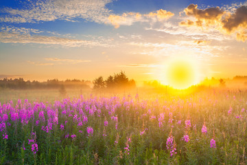 landscape with sunrise  and  blossoming meadow