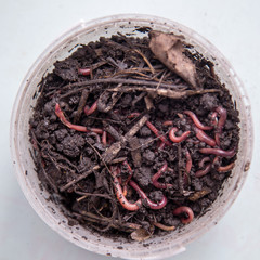 worms for fishing