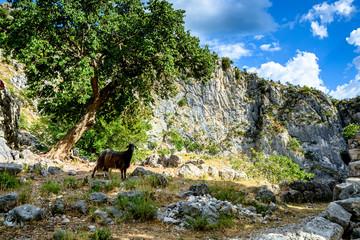 Mountain goat in a picturesque mountainous area