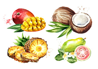 Tropical fruits set. Mango, coconut, guava, pineapple. Watercolor hand drawn illustration  isolated on white background
