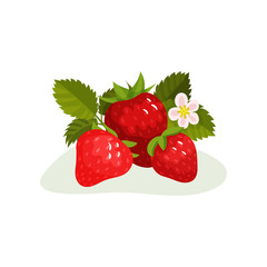 Ripe strawberry with green leaves and blooming flower. Sweet summer berry. Flat vector element for juice or yogurt packaging