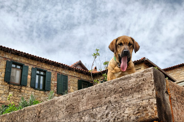 cute young dog is yawning on the stone wall
