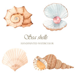 Sea shells with watercolor. Set of shells, sink with a pearl on a white background.