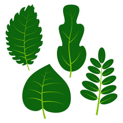Set of four green leaves on white background. Vector illustration