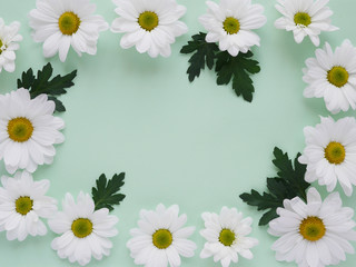 Composition of white chamomile chrysanthemum flowers on a color background, top view, creative flat layout.