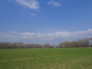 early spring  landscape with green sprouts sown field, bare trees and blue sky, white clouds backgroud, copy space, vivid colors