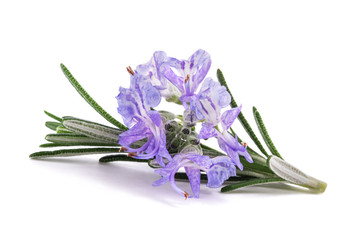 Rosemary sprig in flowers