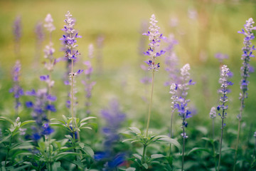 Purple flowers With background blurred