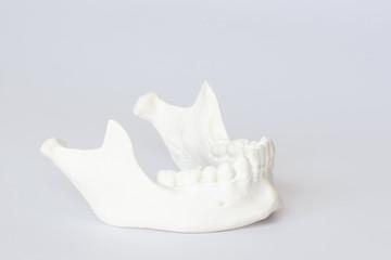 Human jaw bone model on white background