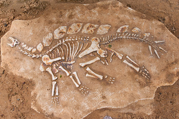 Excavations of the dinosaur. The remains of the skeleton found