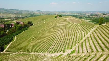 Wall Mural - Panorama aereo delle vigne delle colline delle Langhe del Piemonte