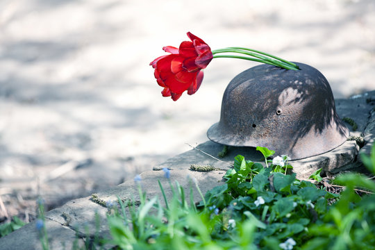 Old military helmet of the Second World War with red tulips