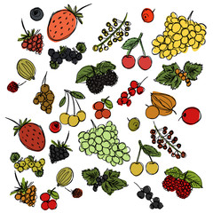 set of different berries painted in the style of children's drawing fast by hand, sketch vector graphics colored drawing
