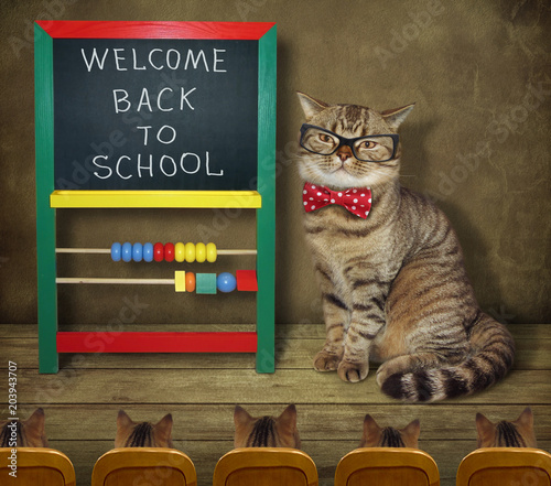 the cat teacher wrote on the blackboard welcome back to school