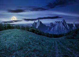 forest on grassy hillside in tatras at night