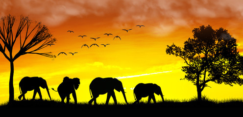familia de elefantes en el atardecer