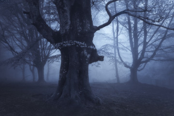 mysterious dark forest at night