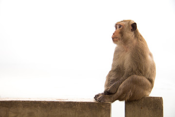 Old monkey sitting on cement concrete feeling something is waiting.